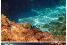 Underwater in the Caribbean