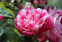Arezzo Flower Show