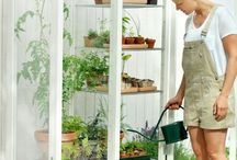 Urban gardens / Gardening for those with little square feet to spare.