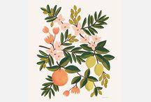 Ilustracion floral