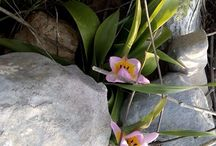 Κρητική Χλωρίδα #cretan #plants