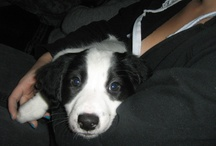Pets / dog, cat, rabbit, animals, pets, animal, pet black, white, grey,