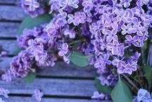 Flower photos!