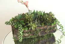 Succulents and weathered wood