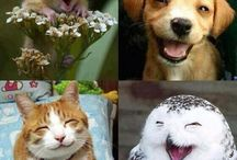 Smiles, Happy & Laughter / It's everything that one need's to lead a healthy happy life.