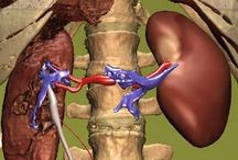 Vérnyomás csökkentő, immun erősítő, koleszterin csökkentő