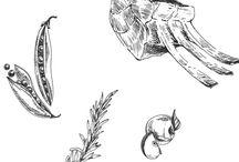ILLUSTRATIONS / Créations d'illustrations