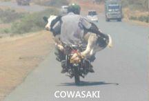 Funny...!