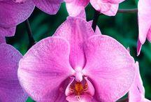 orchidées si jolies