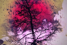 trees / by Hannah Miller