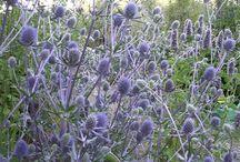 Plantering blåa toner