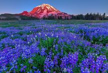 Mount Rainier National Park -USA
