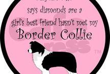 My Collie