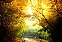 Outono / Sei como voltar:as cores do meu outono desenham caminhos. (Yberê Líbera)