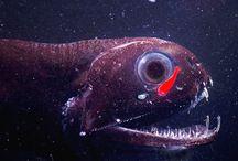 Strange fish of the deep