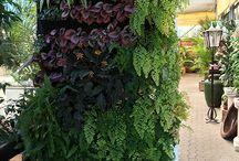 Jardín Vertical Showroom Agrojardín / Esta instalación realizada en dos días sin sistema de fertirriego. Al emplearse un sistema en exterior pero protegido,  se resuelve con sistema Fytotextile de interior.  Especies plantadas: Maranta Leuconera, Espatifilum, soleirolia, peperonia, entre otras.