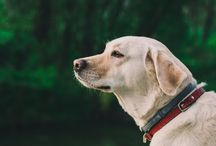 Pet Preparedness and Safety
