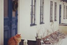 Animals / by Therese Eklund