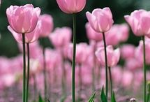 Flower Gardens / Every flower is a soul blossoming in nature.
