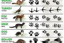 Животные след