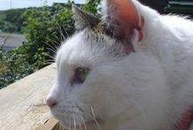 Macskák / Macskákról, akik gazdát keresnek :D