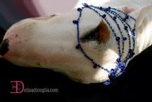 ciro bull terrier / beautiful love dog cirobullterrier.jimdo.com