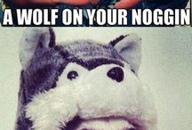 Moon Moon, Doge, haha