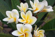 fiori orientali