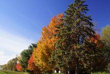 Minnesota Landscape Arboretum Fall 2015 / A day at the Minnesota Landscape Arboretum in Minneapolis.