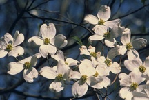 New Plant Introductions & Featured Cultivars / by Lis Meyer