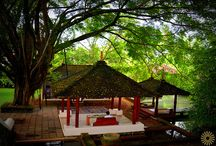 Yoga retreat  Sri Lanka Saman villas Bentota / An invigorating experience for your body and soul…. Introducing our sapphire resort in Sri Lanka ….