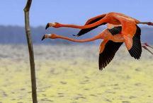 flamingos and Herons in flight