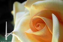 W sugar flower