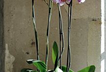 Elegant Flower Arrangments / Ideas on how to make your flower arrangements elegant.