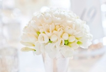 ~ white bouquet ~