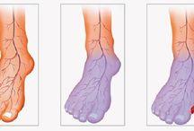 Blood circulation 3