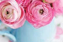 pinning pink / by Sarah Perkins