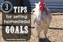 Feathered And Fabulous In 2015 / Planning a new coop or maybe getting some new chicks this year? Let Backyard Poultry inspire New Year's resolutions  for your flock in 2015!