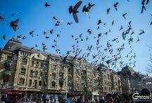 Grozav.org - Timișoara, văzută prin alți ochi. / Grozav.org este o comunitate a celor care vor să vadă Timișoara prin alți ochi. Fondat în 2015, vrem să scoatem la lumină poveștile din jurul nostru și să arătăm o altă față a Timișoarei.