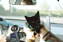теплые коты - warm cats