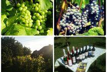 Unkarilainen viini ja ruoka