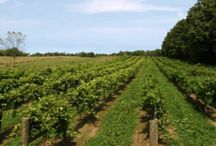 Wineries In Indiana / http://www.kazzit.com/content/indiana-wineries.html