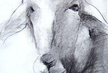 zoology / #katerina_kokkinaki #animal_painting