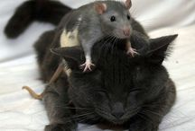 ratties / by Amber Broome