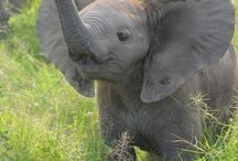Can we get an elephant?