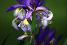 Flowers ~ Nature's jewels