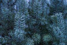 Зима / Природа, пейзажи, деревья, ветви, красивые фото, картинки, анимация, обои, интересные факты