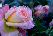 Petals of Perfection / by Doralee Fritz