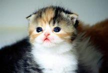 Cute:3 / Love animal love cute love ^^v