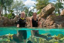 Discovery Cove / Interact with dolphins, snorkel through colorful reefs with thousands of tropical fish, explore underwater shipwrecks, and swim down a tropical river with rocky waterfalls and a freshwater lagoon. www.undercovertourist.com